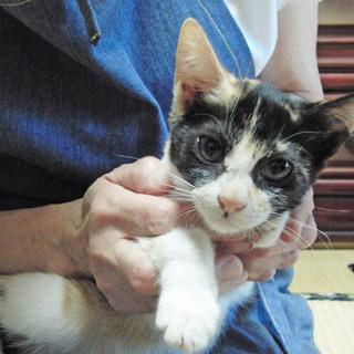 天真爛漫、癒し系のミケ子猫です