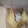 一匹飼いか猫エイズの先住猫のいるお家希望・マール サムネイル4