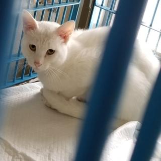 時間がありません 真っ白な猫さん