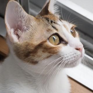 美猫「マロン」ちゃん♡