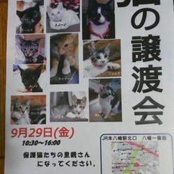 譲渡会開催の御知らせ(本八幡北口一番街)