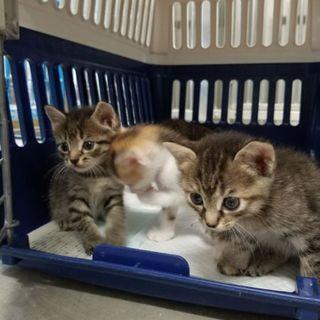 かわゆい赤ちゃん3匹♡1匹ずつでも譲渡可能◎