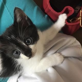 子猫の里親募集!元気な女の子です!