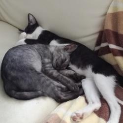 二人仲良くお昼寝