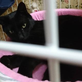 【黒猫】穏やかな子です。