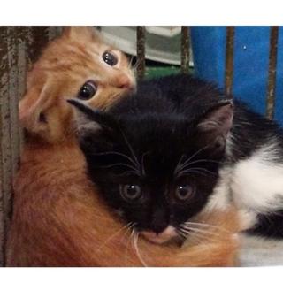 県外の方もお願いします子猫2匹兄弟が待っています