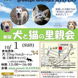 新宿 犬と猫の里親会