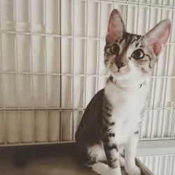 猫ちゃんの里親譲渡会IN高井戸・杉並 サムネイル2