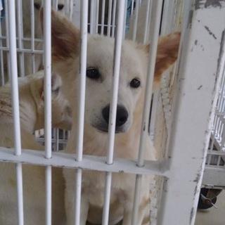 【助けて下さい❗️飼い主持ち込み】可愛い子犬です