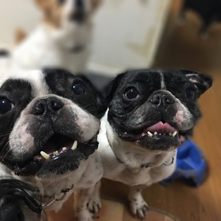 兄弟犬 二匹同時に迎えて下さる方を探しています
