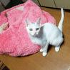 美しい子猫 ミコ