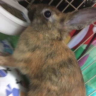 とっても可愛い子ウサギちゃん