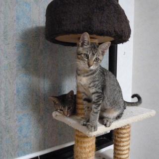控えめに甘えるのが可愛い子猫です