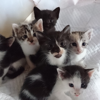 元気いっぱいの子猫ちゃんたちです!
