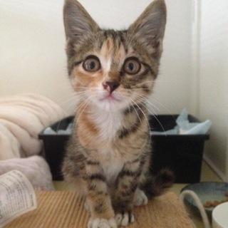 生後約二カ月位 迷子の子猫ちゃん