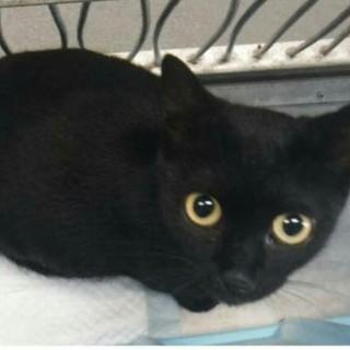 生後3~4か月 飼い主持ち込み3匹の黒猫
