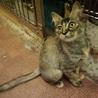 不思議な毛色のサビ猫ちゃん