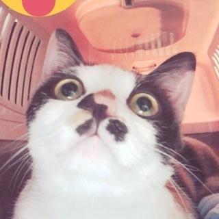 お目目くりくり美人三毛猫ちゃん