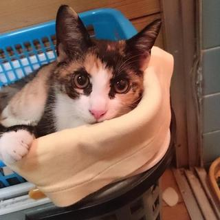 5ヶ月の三毛猫