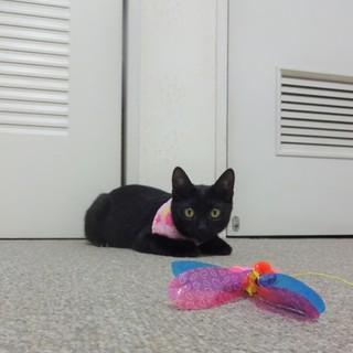 ツヤツヤの黒子猫ちゃん