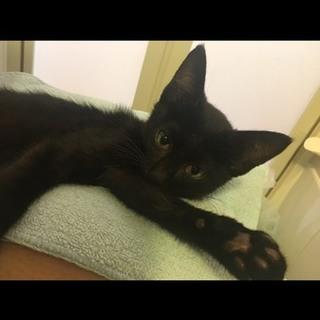 イケメンで賢い黒猫ちゃん