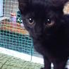 きれいな黒猫ちゃん☆元気いっぱい!