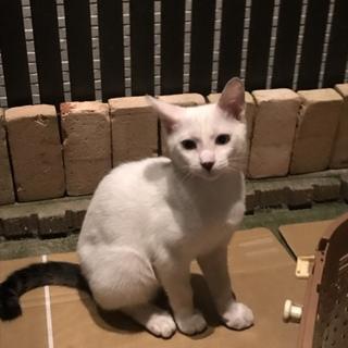 野良猫の赤ちゃん!かわいい猫ちゃんです❤️