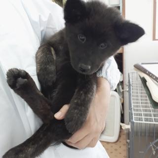 かでな:琉球犬Mix モコモコ甘えん坊の男の子