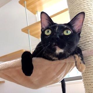 目がクリリ!黒猫風サビたん