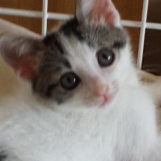 魅力たっぷり!!大きなお耳につぶらな瞳