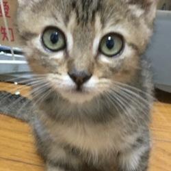 9月30日(土)に愛知県豊川市で猫の譲渡会!