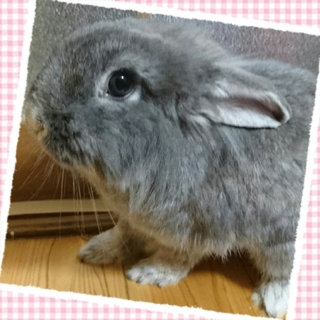 アメファジ×ミニウサギの女の子