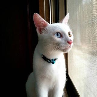 生後5ヶ月程度の子猫