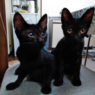 黒太郎と黒次郎