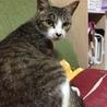 生後3週間 母猫と子猫の里親さん募集