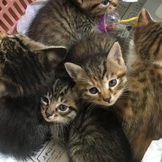 5匹の子猫ちゃんたちの里親さん募集!