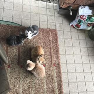 5匹の捨てられた子猫!里親募集!