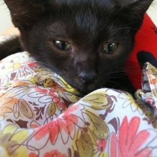黒猫☆男の子