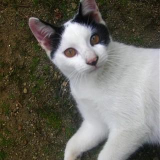 (ΦωΦ)<動画有り♪ 野良の子猫 黒白 白黒