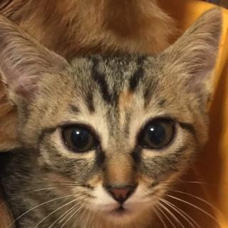 2カ月半 母猫が守っていた5兄妹♂みっちゃん
