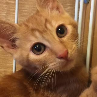 2カ月半 母猫が守っていた5兄妹♀マーブルちゃん