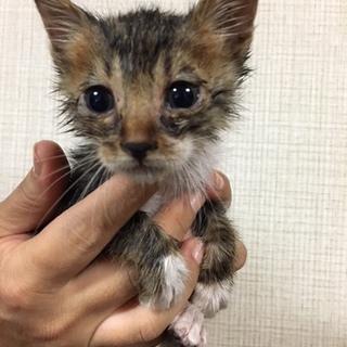 子猫が4匹生まれています!