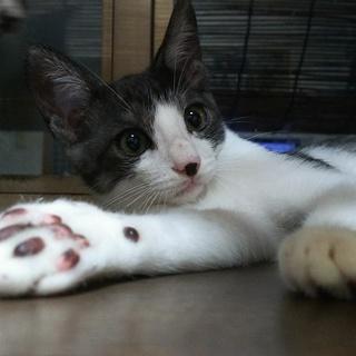 優しいイケメン子猫、遠慮がちに甘えてきます
