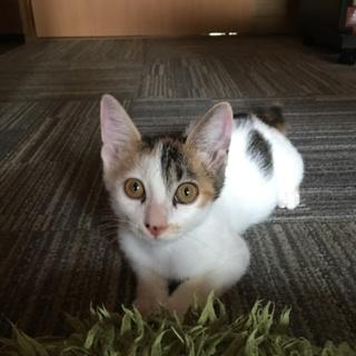 三毛猫 現在3〜4ヶ月程