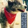 おっとり小柄な秋田犬の茜ちゃん サムネイル3