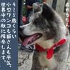おっとり小柄な秋田犬の茜ちゃん サムネイル4