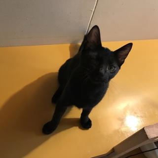 ☆黒猫のカリイちゃん♀☆