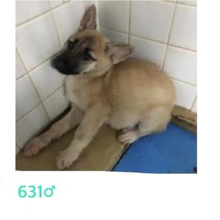 9/27朝まで!期限間近です!子犬を助けて下さい!