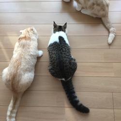 今朝の三猫
