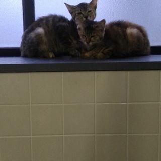 二匹の仲良し子猫